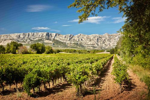 Crédits image : Association des Vignerons de la Sainte-Victoire